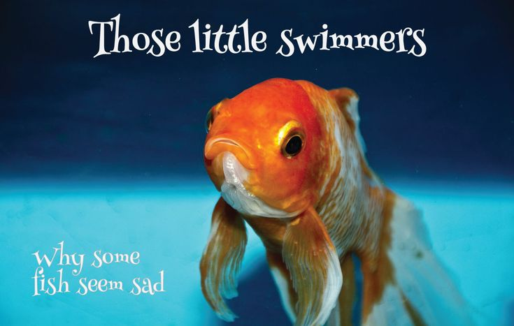 Those Little Swimmers! Read about why some fish seem sad and why fish are the most disregarded pet. #fish #pets https://petztrax.wordpress.com/2015/08/14/those-little-swimmers/