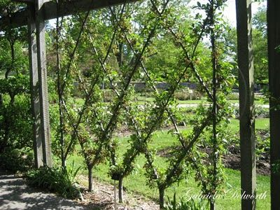 Beautiful privacy fence.