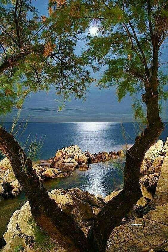 Naturbilder: schöne #Naturbilder #Natur #amMeer #Baum