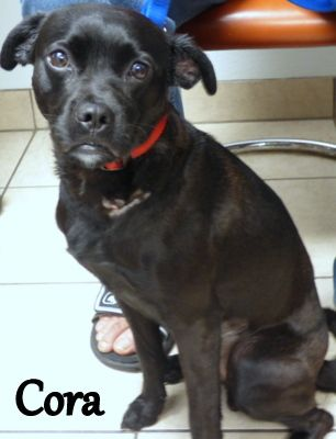 11/21/16 Check out Cora's profile on AllPaws.com and help her get adopted! Cora is an adorable Dog that needs a new home. https://www.allpaws.com/adopt-a-dog/pug-mix-terrier/5498106?social_ref=pinterest