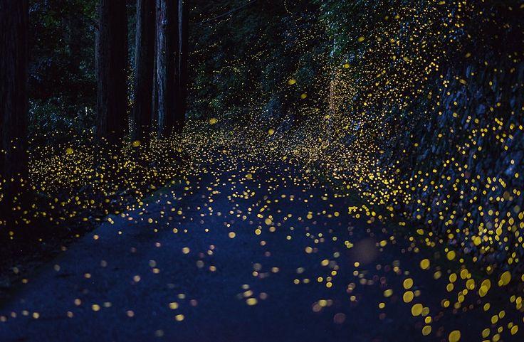 The Beautiful Flight Paths of Fireflies
