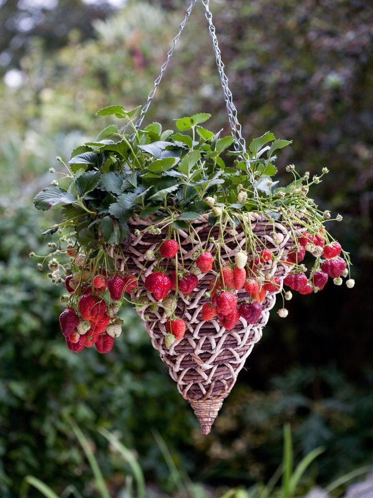 Creative strawberry planters strawberry planters grow