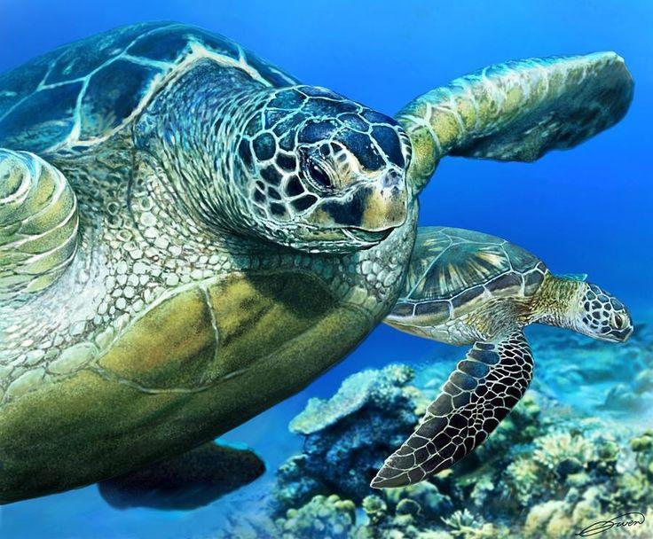 Oem морских черепах логотип прекрасный животных обои стены стикеры искусства настенной росписи дома печать индивидуальные симпатичные ретро художественная ковка плакат декор подарки