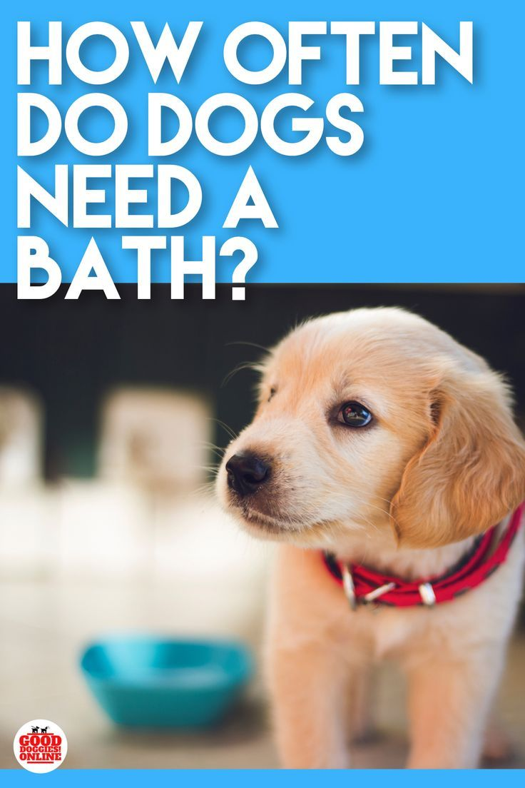 How Often To Bathe A Dog Bathing A Puppy Dogs Dog Training Techniques