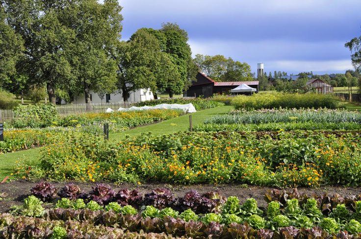 Livet på Wij Trädgårdar