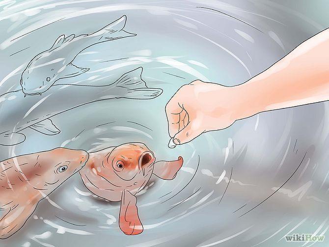 How to enjoy having #pet #fish