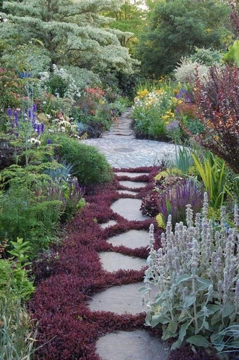 Beautiful garden path with creeping thyme.