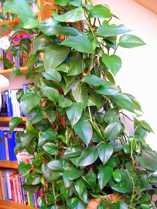Schöne Pflanzen mit Kaffeesatz & Mineralwasser