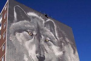 Wolf Mural    #GILOVEMANITOBA