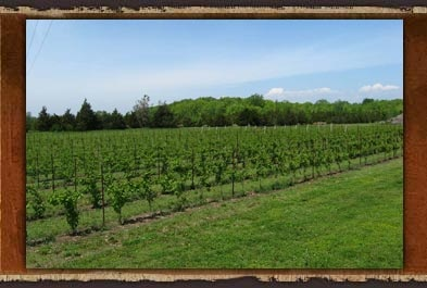 Take a trip to the vineyard. Check out the full blog post: http://summerfunguide.ca/blog/cape-velsey-in-early-spring/ #summerfunguide #thingstodoinontario