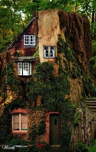 house built into a tree