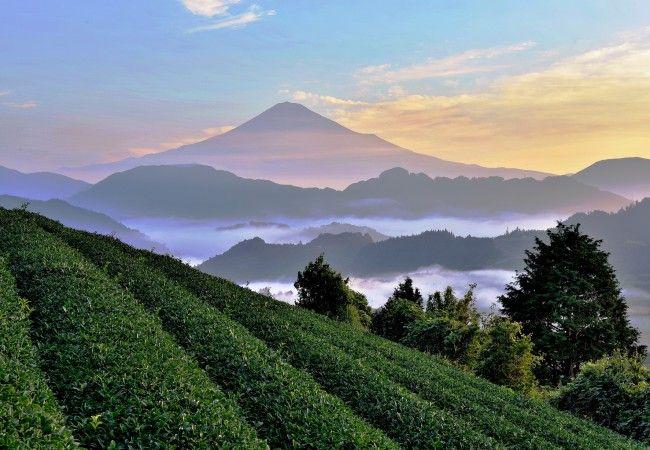 Una valle culla di tradizioni rurali millenarie. Un itinerario nella prefettura di Shizuoka, tra l'oceano e le montagne, con vista sul monte Fuji