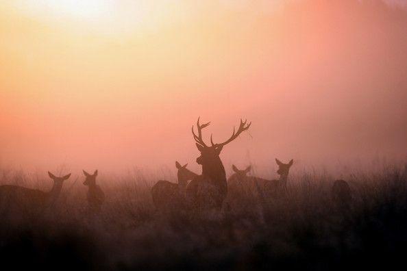 The Autumn Deer Rut Begins In Richmond Park