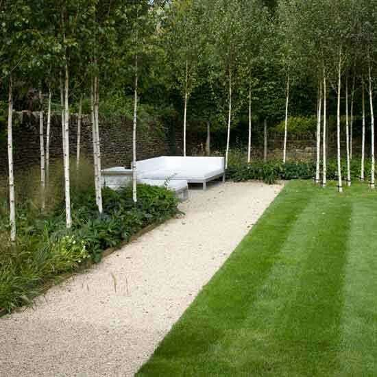 "Birch trees for front curb line ""fence"""