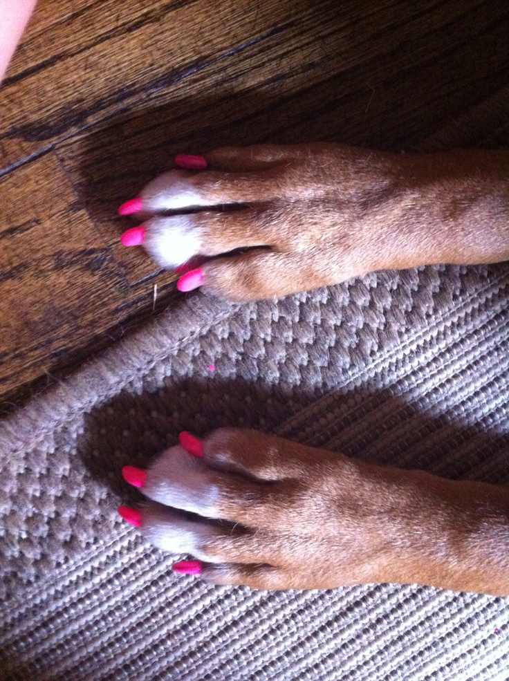 how to cut long dog nails
