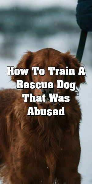 How To Train A Rescue Dog That Was Abused Rescue Dogs Dog Abuse