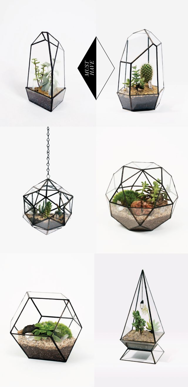 Terrarium géométrique en verre. - Geometric glass terrarium.