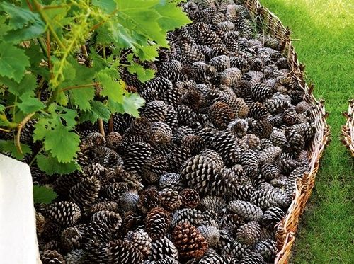 Pine Cone Mulch - an attractive border and practical way to keep dogs out of your garden beds. As they breakdown, they will add nutrients to your garden too. Pine cones also look great as a decorative mulch for container gardens.