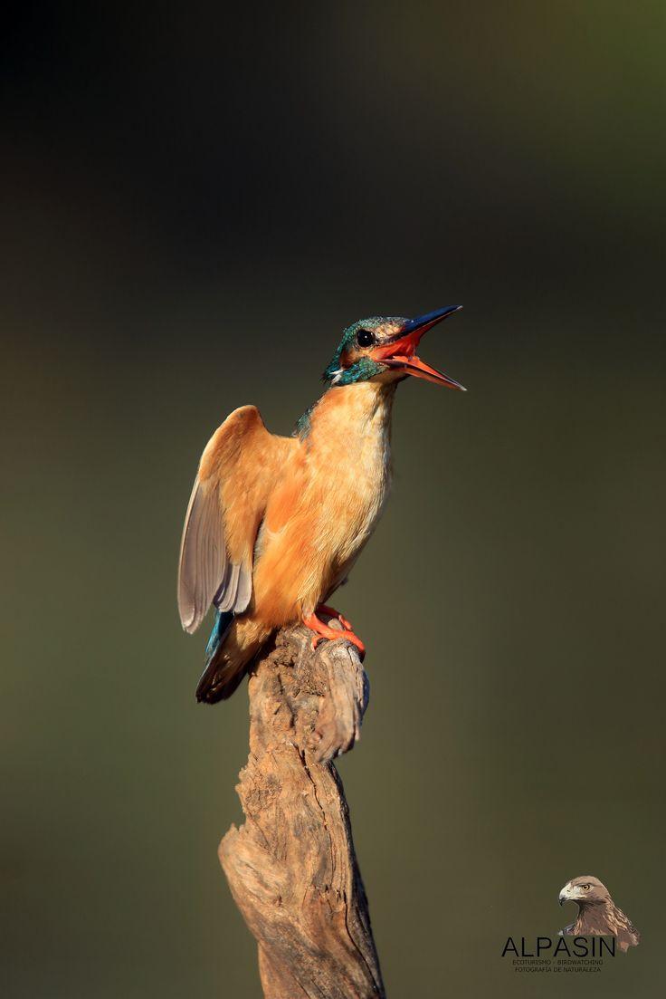 ¿Sientes la llamada de la Biodiversidad, aquí en el corazon de Sierra Morena?