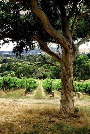 Penny's Hill Winery | JH&S