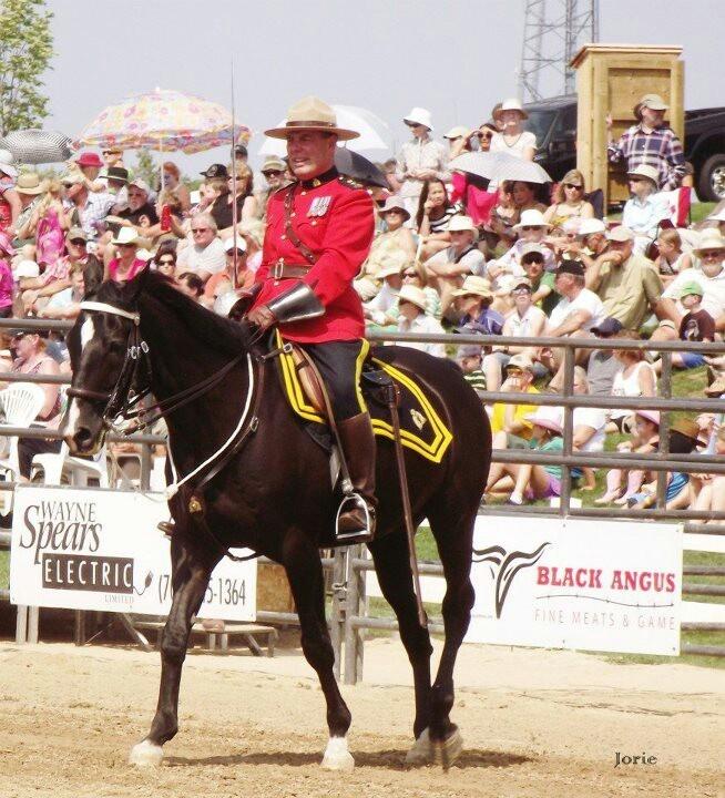 Horse, horses, RCMP, musical ride