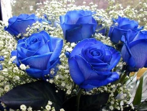Rosas Azuis  são produzidas através de enxertos.