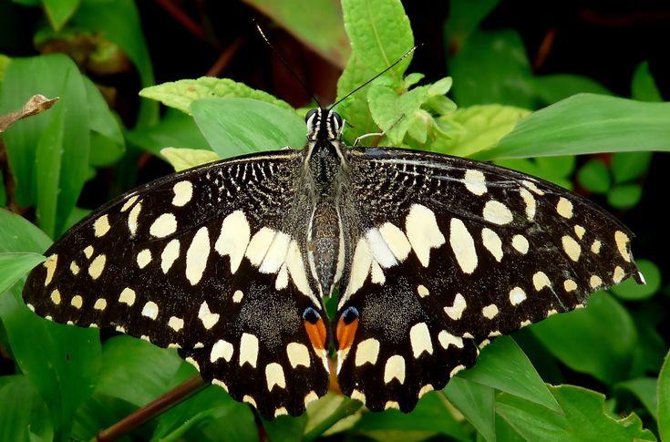 Te enseñamos las mejores especies de flores y plantas para atraer mariposas que debes tener en cuenta para lograr que tu jardín luzca mejor que nunca.