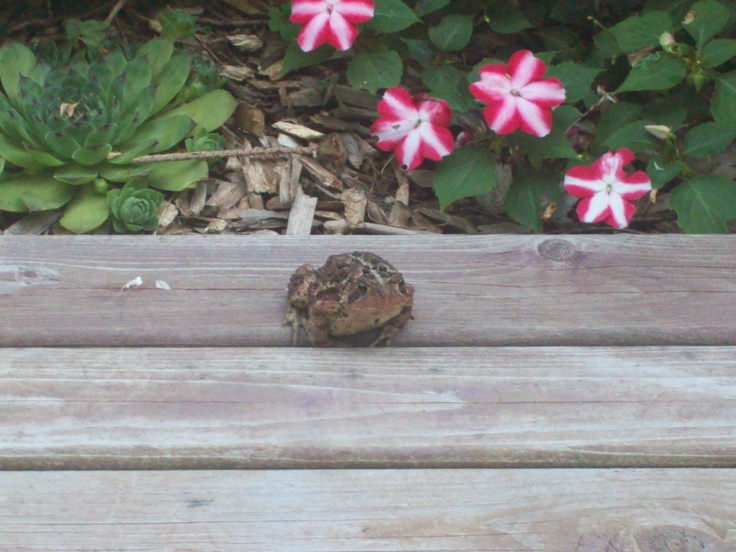 Even the frog likes them.