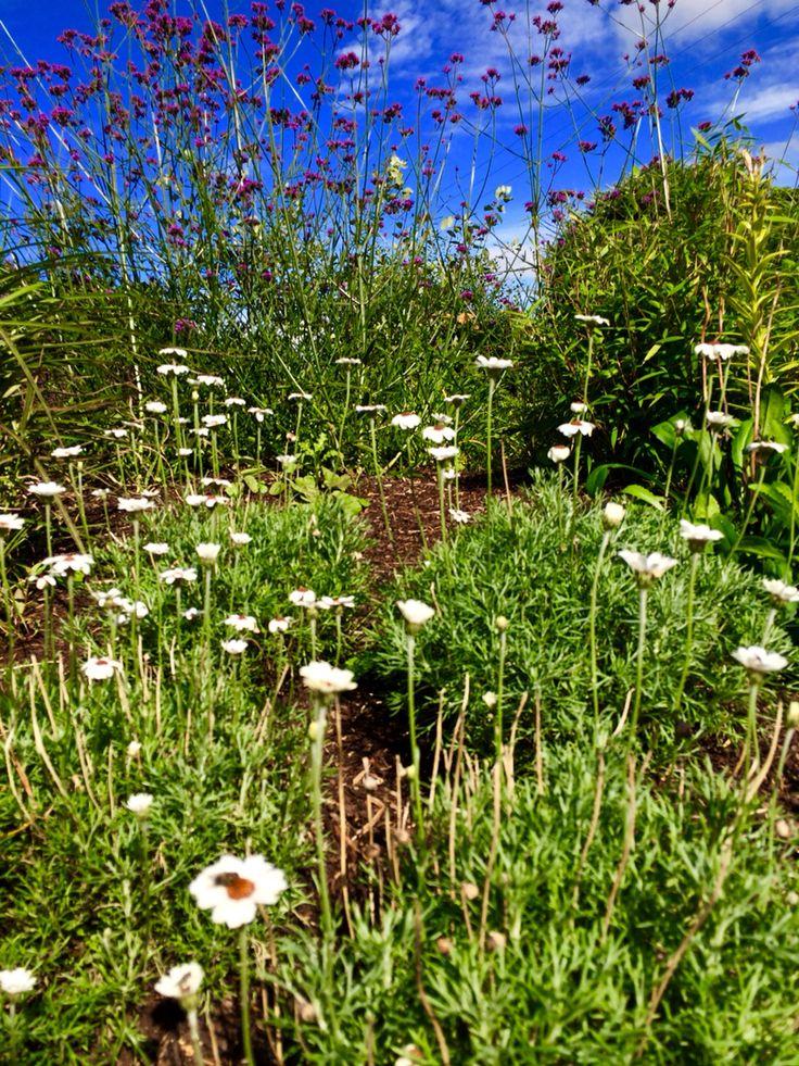 Our garden @ Ballinsheen House