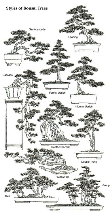 Gardens Lovers - Styles & Shapes of Bonsai Trees