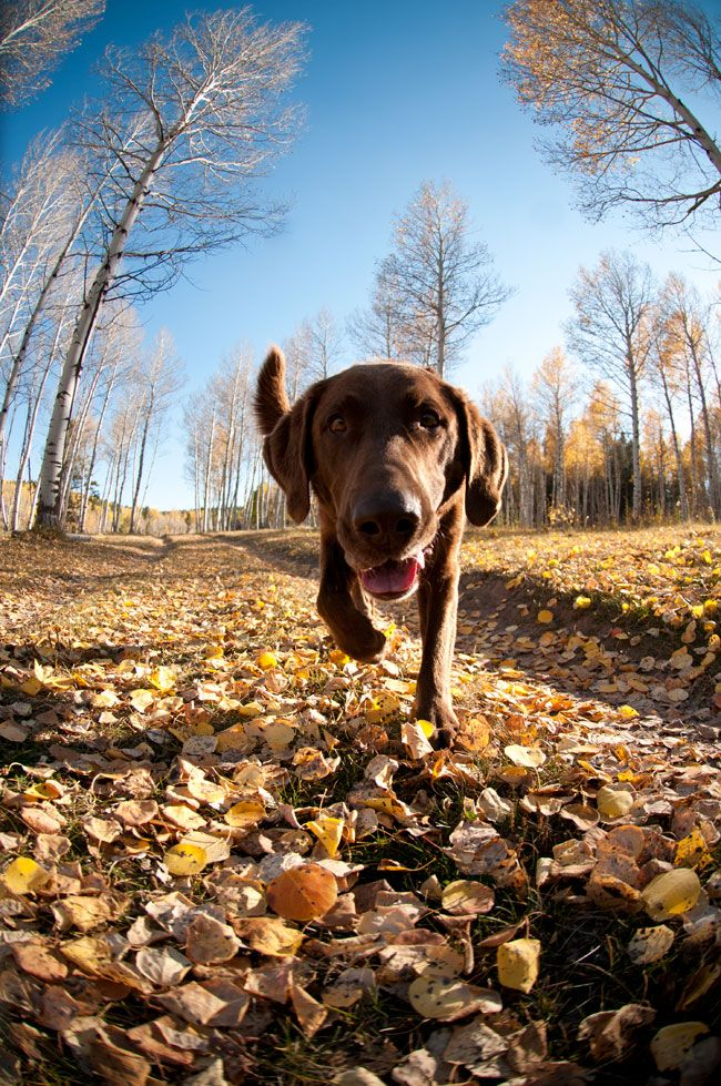 This photo taken by photographer, Jeff Diener, is a great example of getting down to the dog's level for a more interesting viewpoint. For more tips on capturing great images of your furry friends, read our Learn  Explore article:
