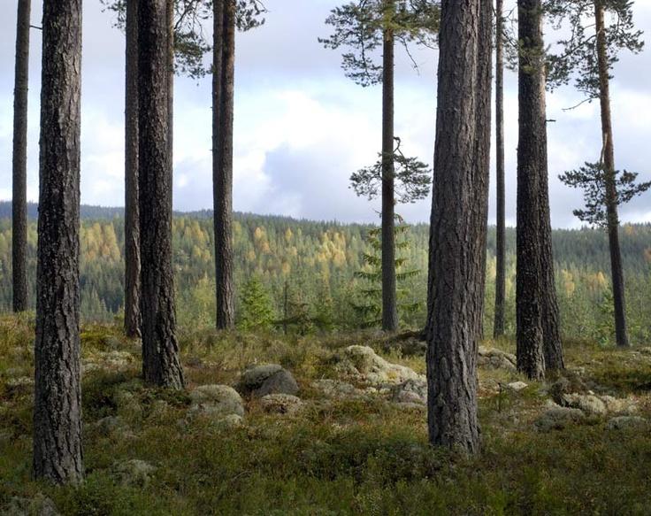 Landscapes : Haakon Harriss Photography