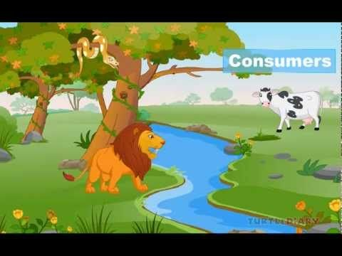 CC cyle 2 Week 3 Food Chain and Food Web Lesson   Know Food Chain - YouTube