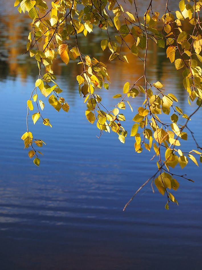 Nuuksio National Park / Minna Rosé blog http://minna-rose.blogspot.fi