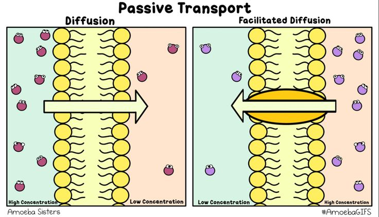Passive transport GIF created by the Amoeba Sisters demonstrating diffusion and facilitated diffusion! #AmoebaGIFS http://www.amoebasisters.com/amoebagifs.html