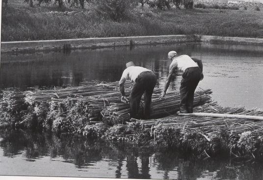 Canapa, fasi lavoro - Tratto da:Gruppo di Studi Pianura del Reno Associazione per la conoscenza della storia locale e dell'ambiente naturale e sociale