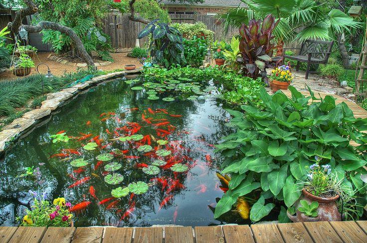 цветы для пруда - Поиск в Google