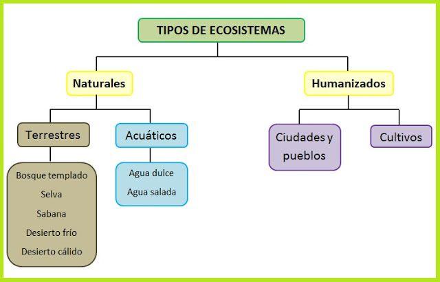Mi Clase De Primaria Tema 4 Los Ecosistemas Tipos De Ecosistemas Ecosistemas Actividades De Los Ecosistemas