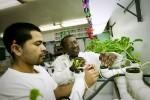 Hydroponic gardens calm Rikers Island teen inmates  http://idroponica.myblog.it/archive/2013/01/15/hydroponic-gardens-calm-rikers-island-teen-inmates.html