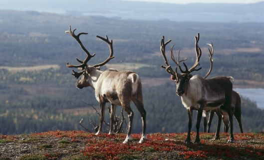 Lapland – The North of Finland. No Ordinary Destination!
