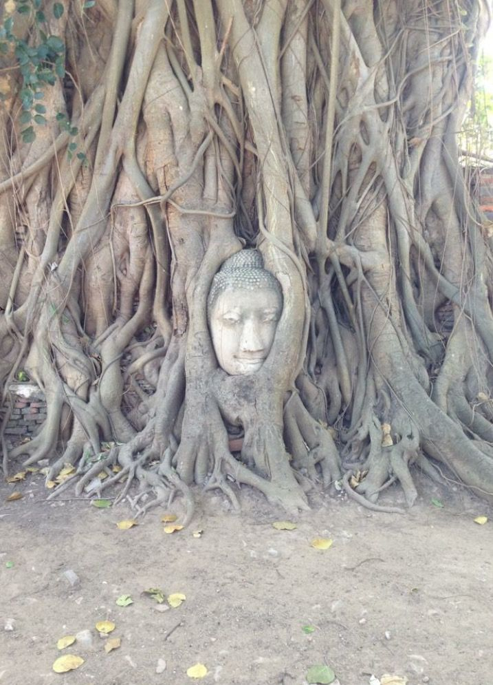 Ayutthaya, Thailand 2014 (photography by Catherine Wells)