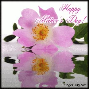 animated happy mothers day   standard html a title click here to get memes glitter graphics funny ...