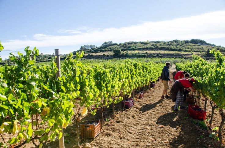 """This vineyard is from our feature """"Castigno's Whimsical World"""""""