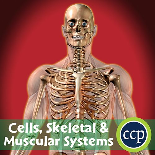 17 best ideas about muscular system functions on pinterest | abs, Muscles