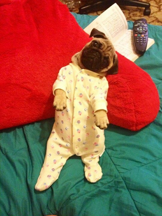 101 Best Images About Puppy S In Pj S On Pinterest