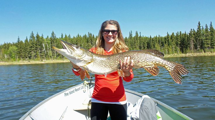 32 best images about fishing in saskatchewan on pinterest for Canada fishing resorts