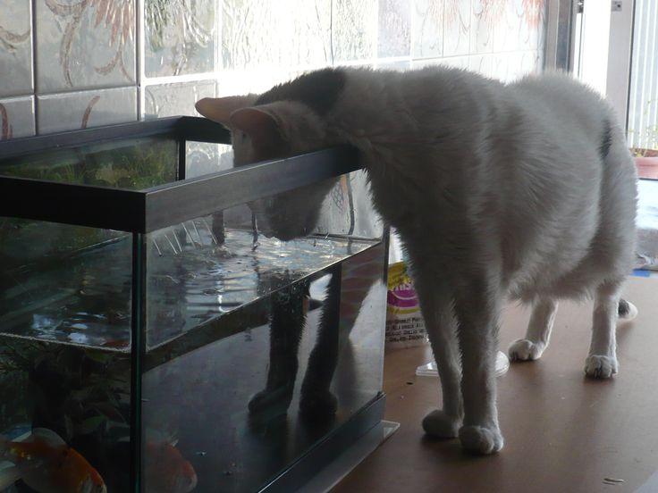 a água do aquário é muito boa