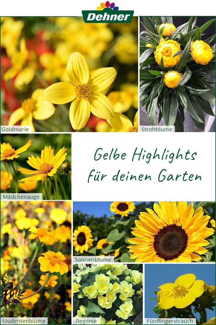 Gelbe Pflanzen Fur Deinen Garten Sommerblumen Pflanzen Gelbe Pflanzen