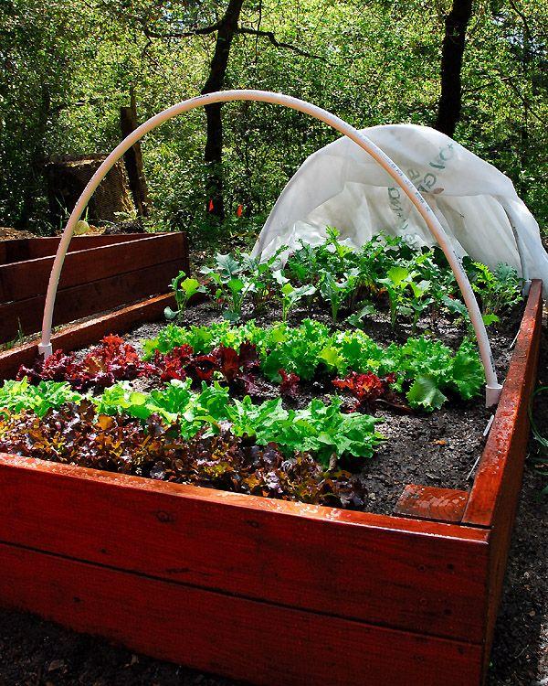 17 Best Images About Jardin Box On Pinterest Raised Gardens Raised Beds And Raised Garden Beds