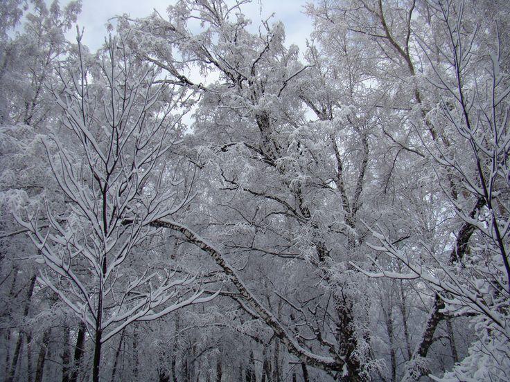 Зимние деревья. Winter trees